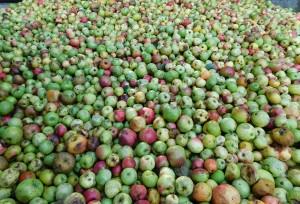 manzanas-sidra-euskadi